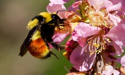 Center for Food Safety Secures Legal Victory for Bees!