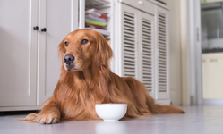 Protect Your Pup: FDA's New Warning on Dog Food Safety and Canine Heart Disease